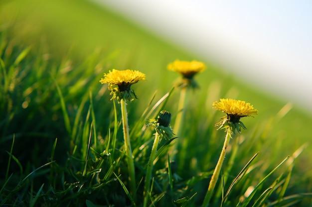 黄色の花に近いです 無料写真