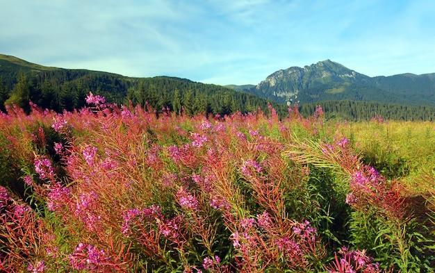 花とフィールド 無料写真