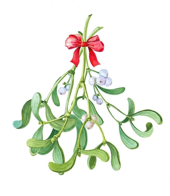 ヤドリギの水彩束。キスのクリスマスの伝統。水彩冬イラスト Premium写真