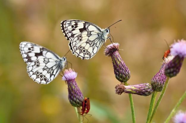自然に花の上に座っている美しいカラフルな蝶。草原の外に太陽がある夏の日。コル 無料写真