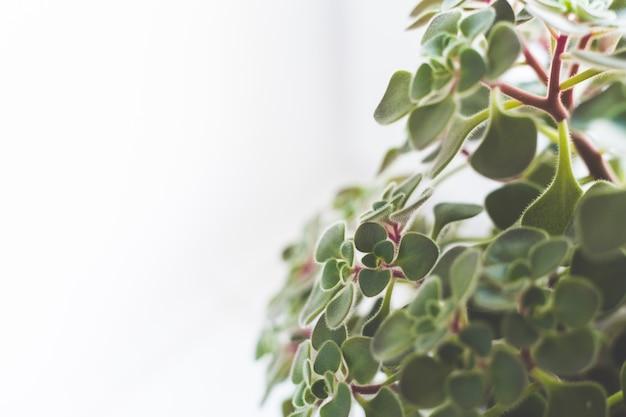 白い背景の上の葉 無料写真