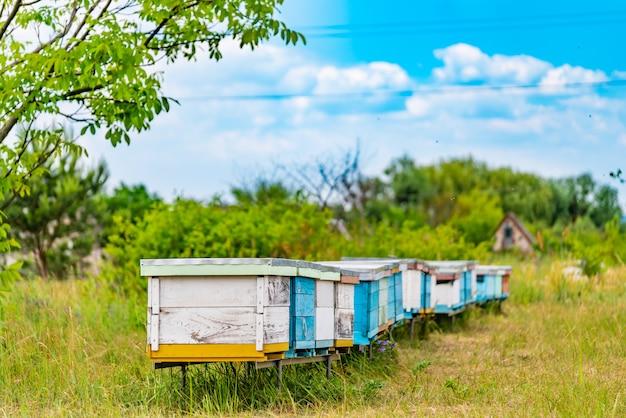 ミツバチの白と青のハイブの行 Premium写真