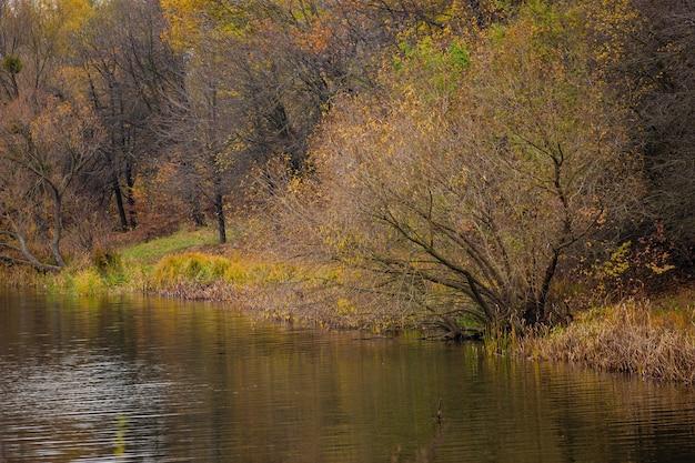 秋の森の川の美しい景色。 Premium写真