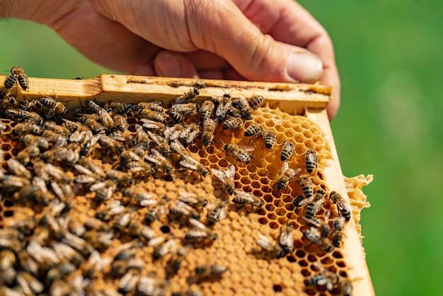 人間の手は、内部に蜂の巣と蜂が入った木製フレームを保持しています。閉じる Premium写真