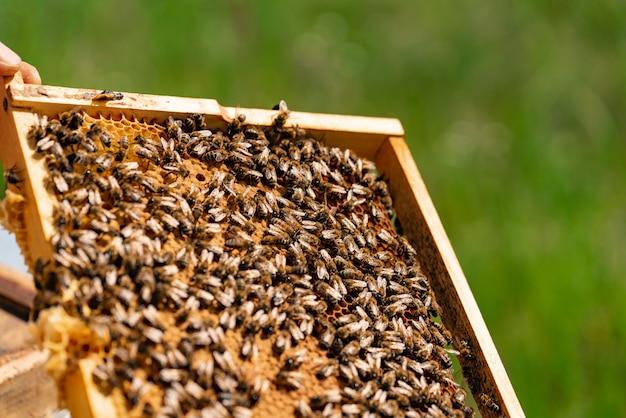 夏には庭で蜂が蜂の巣をハニカムで満たします。閉じる Premium写真
