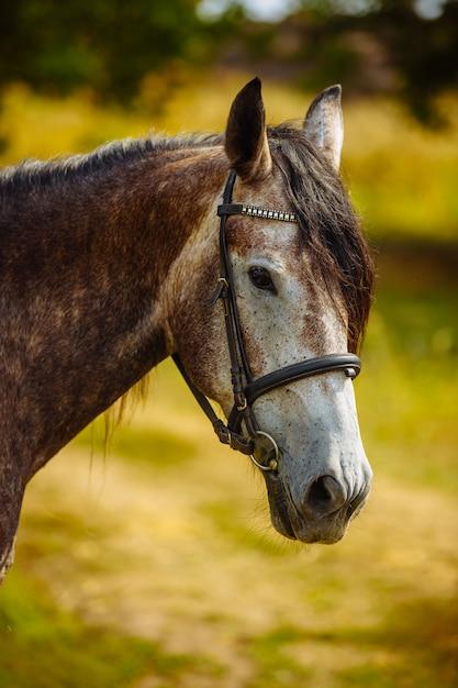 自然に馬のクローズアップの肖像画 Premium写真