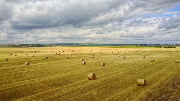 曇り空の麦畑 Premium写真