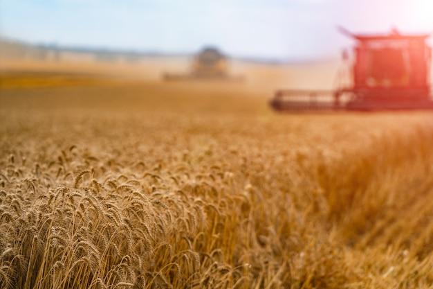 ハーベスターを組み合わせます。麦畑を収穫するための収穫機。 Premium写真