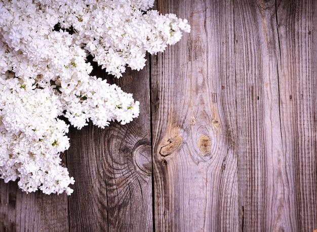 ライラック色の花の白い枝 Premium写真
