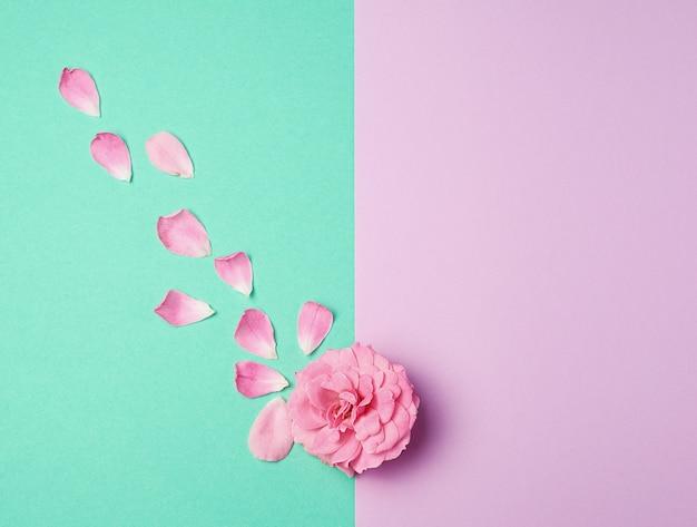 ピンクに咲くバラの芽と緑の紫色の背景に散りばめられた花びら Premium写真