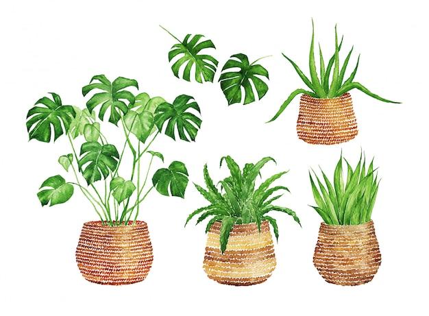 枝編み細工品バスケットの水彩屋内植物 Premium写真