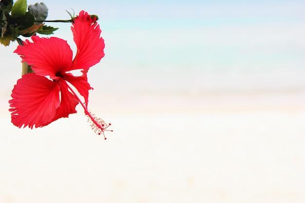 赤いハイビスカスの花のクローズアップ Premium写真