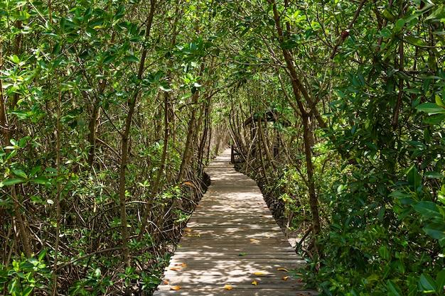 マングローブ林の長い木道 Premium写真