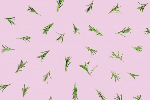 ピンクのパステル調の背景にレイアウトされた新鮮な緑の有機ローズマリーの小枝 Premium写真