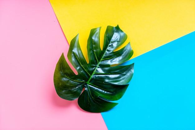 カラフルな背景を持つ熱帯のヤシの葉 Premium写真