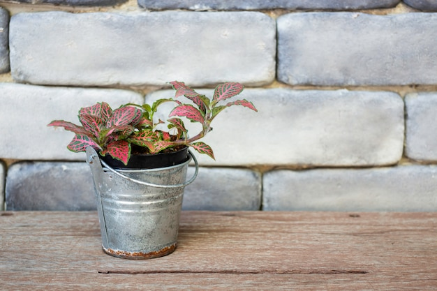 ミニ青葉植木鉢 Premium写真