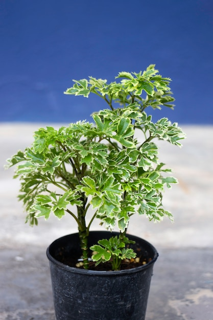 ミニ植木鉢の性質 Premium写真