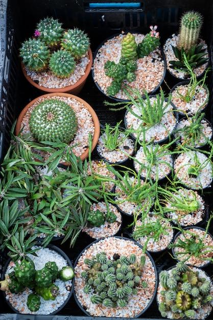 ウィンドウショッピングでサボテンの植木鉢 Premium写真