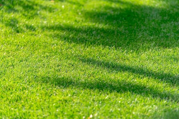 緑の夏の草、草フィールドのテクスチャ、木のシルエット、背景に抽象的な影 Premium写真