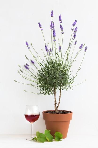 プロヴァンスのインテリアで咲くラベンダー。 無料写真