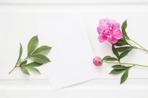 Симпатичный лист белой бумаги и цветы пиона. Бесплатные Фотографии