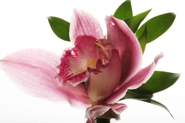 ピンクの蘭のクローズアップ Premium写真