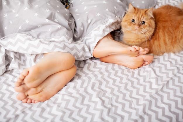 毛布の下の恋人の足。ベッドで楽しんで幸せなカップル Premium写真