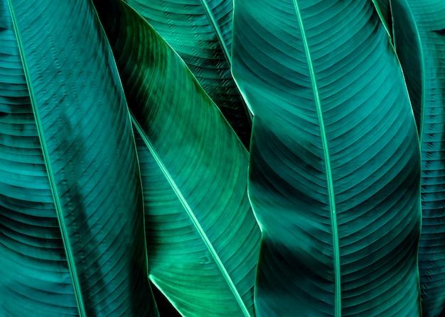 緑の葉のテクスチャ背景 Premium写真