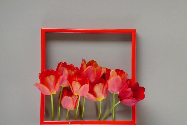 花のフレーム。花カード。赤いフレームの赤いチューリップ Premium写真
