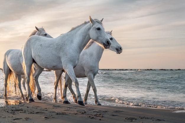 ビーチで白い馬 Premium写真