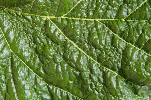 緑の葉のテクスチャ 無料写真