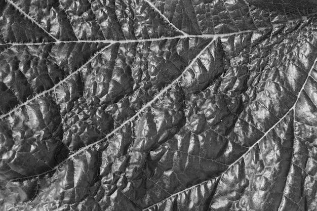 モノクロの葉のテクスチャ 無料写真
