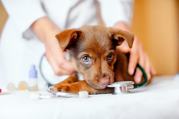 獣医。 Premium写真