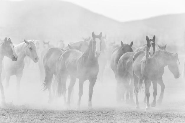 ほこりと黒と白の牧場の馬 Premium写真