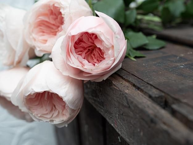 芸術的なぼかしの美しい牡丹形の繊細なピンクのバラ。 Premium写真