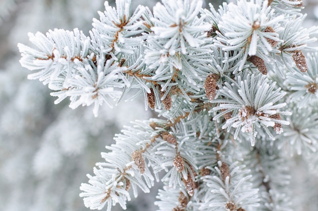 雪の中でモミの木の枝のクローズアップ Premium写真