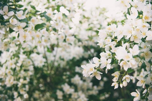 Весеннее белое цветение Premium Фотографии