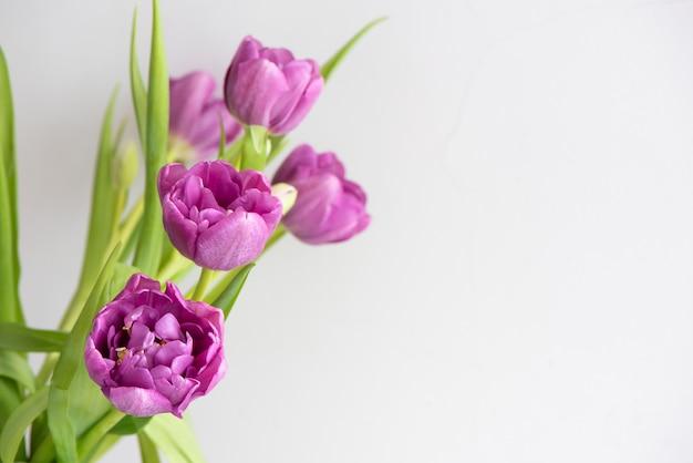 Букет из розовых фиолетовых тюльпанов на светлом фоне. праздничная открытка. Premium Фотографии