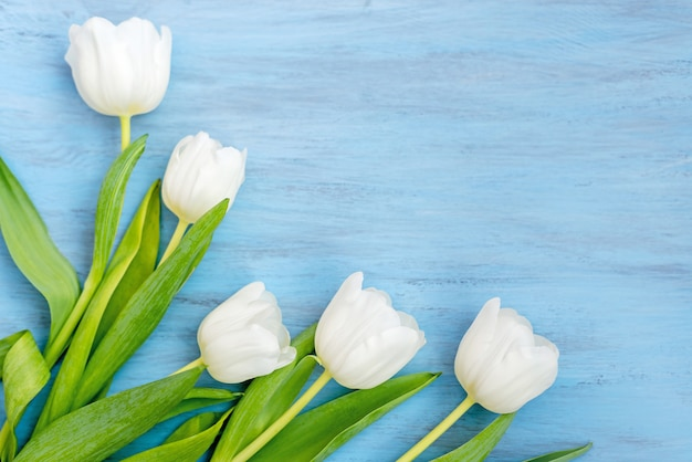 青い木製の背景に繊細な白いチューリップの花。バレンタインデー、母の日のコンセプト。 Premium写真
