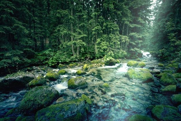 暗い森の中の川。 無料写真