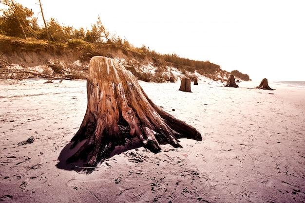 スロヴィンスキー国立公園の樹木の幹。 無料写真