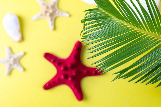 Тропический фон с морской звездой Premium Фотографии