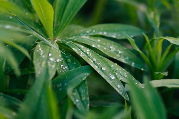 Фон из зеленых листьев Premium Фотографии