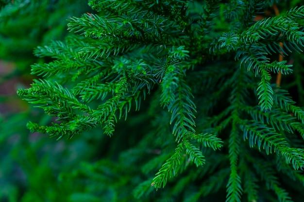 植物園の樹木や植物。植物園の密な緑の植生。テネリフェ。スペイン。 Premium写真