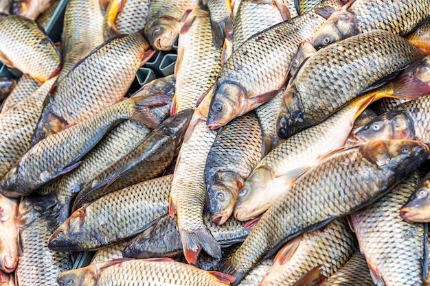 市場のカウンターで魚。バックグラウンド。テキスト用のスペース。 Premium写真