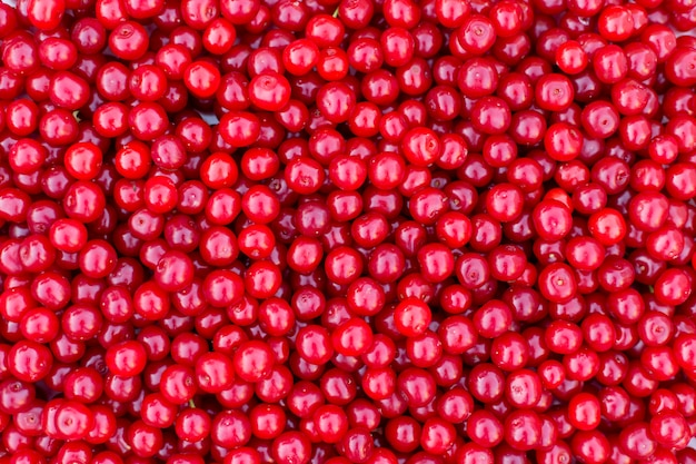 新鮮な赤いチェリー、夏の果物背景テクスチャ。 Premium写真
