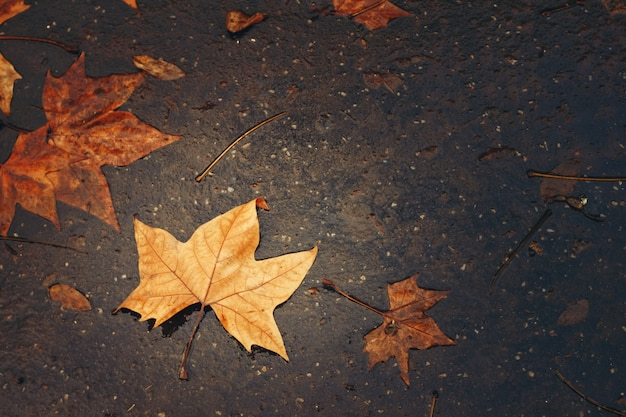 カエデの葉と秋の背景 Premium写真