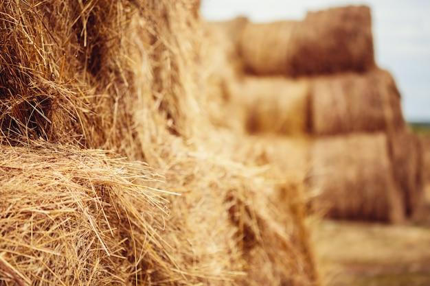 収穫後のフィールドで干し草の俵 Premium写真