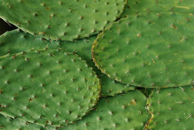 とげのあるサボテンの葉 Premium写真