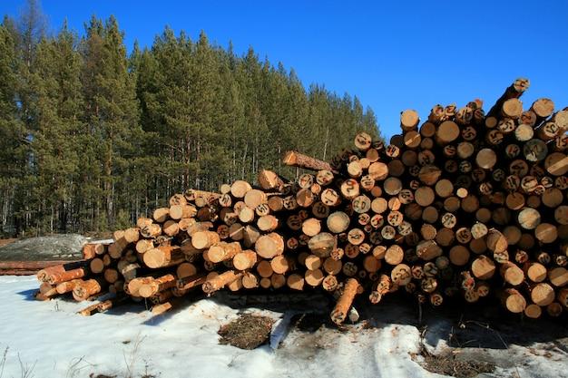 倉庫伐採松の木と松林 Premium写真